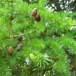 Комплект для выращивания деревьев дома
