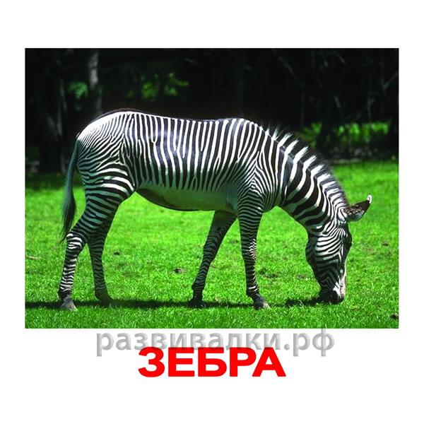 загадки в картинках дикие животные