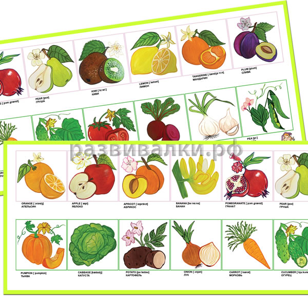 ������ � ����� / Fruits and vegetables (� �������������, �-146)