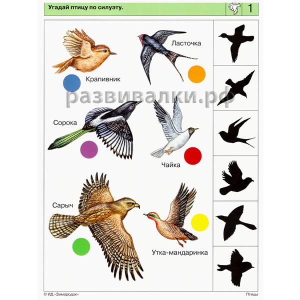 Логико малыш мир природы птицы